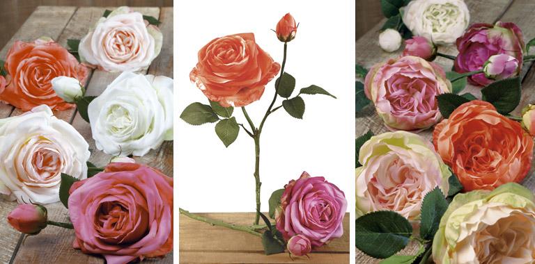 rosas haste curta