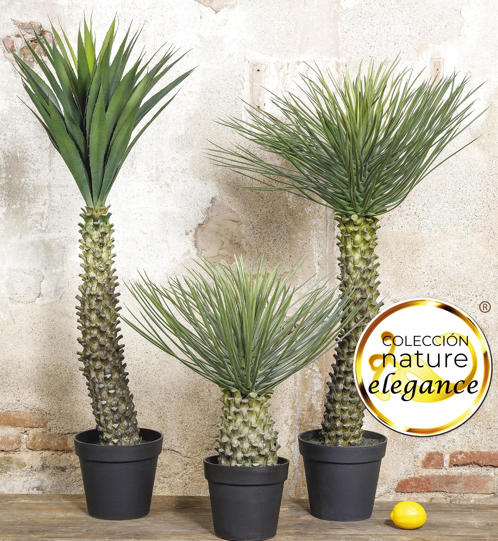nature elegance plantas